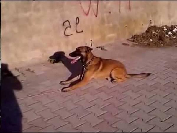 colier de dressage pour chien
