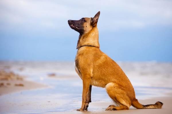 tuto dressage de chien